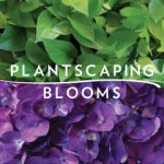 Profile picture of Plantscaping & Blooms